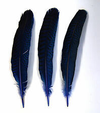 "3 Pcs PEACOCK QUILLS 10""-14"" Dyed ROYAL BLUE Feathers; Costume/Bridal/Halloween"