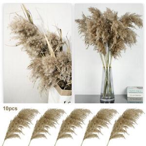 10x Natural Dried Pampas Grass Reed Flower Bunch Wedding Bouquet Home Decor UK