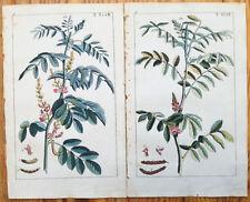 WILHELM: Botanical Engraving Indigo 2 Prints - 1810