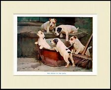JACK RUSSELL FOX TERRIER PUPS TAKE A BATH GREAT DOG PRINT MOUNTED READY TO FRAME