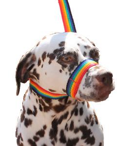 Rainbow Dog Lead Stop dogs pulling slip lead collar halter training figure of 8