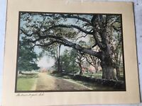 WALLACE NUTTING LANDSCAPE COLORED PRINT THE GREAT WAYSIDE OAK
