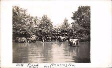 Kennington near Ashford. Ball Pond. Happy Hour. Cattle.