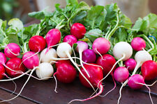 """Easter Egg Radish *Heirloom* (300 Seed's) """"Free Shipping"""" Non-Gmo"""