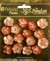 Forget Me Nots ANTIQUE PEACH 16 Paper Flowers 20-24mm across Penny Lane Petaloo