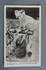 R&L Postcard: Rose Stereograph Co, Koala Australian Native Bears