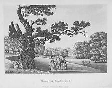 OLD ANTIQUE PRINT WINDSOR PARK HERNES OAK BERKSHIRE c1799 AQUATINT by S IRELAND
