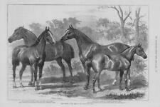 1875 Antique Print - LONDON Agricultural Hall Horse Show Roadsters Hunters (288)