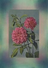 VINTAGE PINK DAHLIA FLOWER BOTANICAL PLANT COLLAGE PICTURE ART PRINT W/  PASTELS