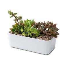 Home Planter Desk Ceramic White Flower Pot Rectangular Succulent Plant Pot Sale