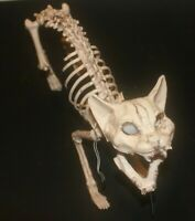 "14"" GreenEye Big Cat Skeleton Halloween, Scary grim grave yard, Sturdy reusable"