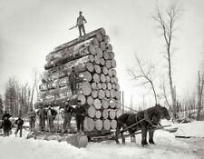 Logging Photo Horse Skidding In Northern Wisconsin 1900