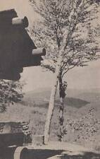 Vintage POSTCARD c1930s View from Cabins Coolidge State Park PLYMOUTH, VT 14928