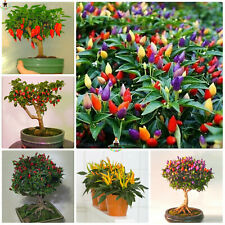 Japanese Ornamental Rainbow Seeds Plants Hybrid Pepper Bonsai Diy Fresh 100pcs