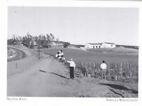 """*Postcard-The Nouveau Race"""" (Race w/Wine in Hand) *Temecula Wine Country (A95-1)"""