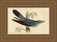 Antique handcoloured bird print Cuckoo Cuculidae / koekoek Kuckucke 1860