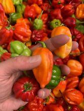 Organic Jamaican Scotch Bonnet Peppers-Homegrown in Beautiful Garden State
