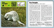 Tree Porcupine - Mammals - 1970's Recontre Safari Wildlife Card