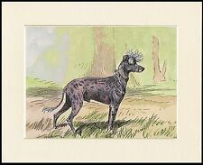 CHINESE CRESTED VINTAGE STYLE DOG PRINT READY MOUNTED