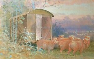* SOUTHDOWN SHEEP and OLD SHEPHERDS HUT * PRINT OF A PAINTING BY BENINGFIELD