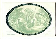 Australiana Nature Unadorned Lyrebird & Goanna c.1905
