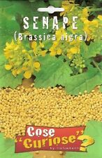 Semi Seeds Senape Nera Brassica Nigra semence semilla samen zaad シード семена