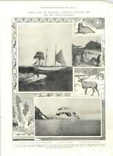 1905 Charcot Expedition The Francais Giant Penguins