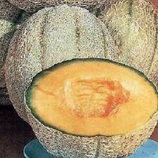 200 CANTALOUPE SEEDS Planters Jumbo Melon Planters Cantaloupe Seeds