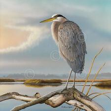 Marsh Watch - Great Blue Heron by Richard Clifton Art Print Poster Bird 13x19