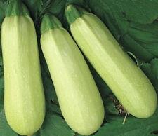 Zucchini CHAKLUN MAGICIAN Seed marrow squash organic seeds Ukraine 3 grams