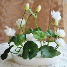 30 Pcs MINI LOTUS Seeds Flower Pot Seed Mixed Color Water Lily Plant Perennial