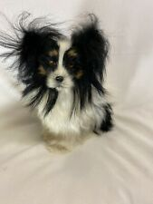 Papillion Black And White Life Like Replica Figurine Dog Made With Goat Hair
