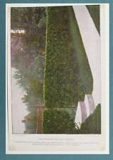 1897 Stecher Chromolithograph Botanical Print CALIFORNIA PRIVET HEDGE