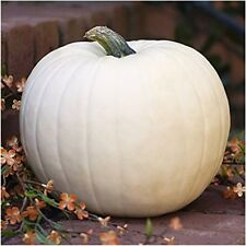 20 pc Lumina White Pumpkin Seeds Fresh Home Garden Fruit Seed Halloween Decor