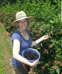 Nutritious Jumbo Thornless Blackberry Seeds