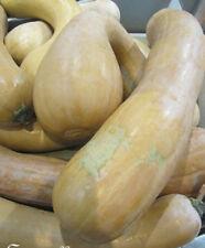 """♫ COURGE """"Longue de Nice"""" -Cucurbita ♫ + Graines + ♫ Plante Potagère Gustative ♫"""