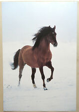 (PRL) 1999 CAVALLO NEVE CHEVAL HORSE VINTAGE AFFICHE PRINT ART POSTER COLLECTION