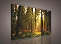 100x75cm LARGE CANVAS WALL ART PRINTS PICTURES Forest Trees Landscape Unframed