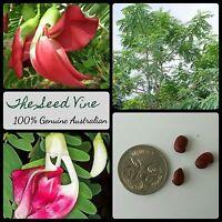 10+ RED HUMMINGBIRD TREE SEEDS (Sesbania grandiflora) Flower Tropical Edible
