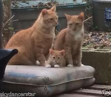Feed Mom Dad Cat And Kitten Family 100% Donates To Cat Rescue Receive Photo