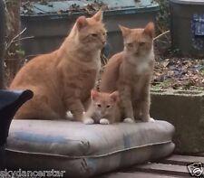 SPONSOR  CAT KITTEN FAMILY RECEIVE COLOR PHOTO CAT RESCUE NON PROFIT