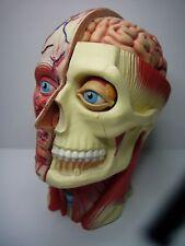 Vintage Miniature 3D Curiosity Model Anatomical Head
