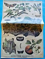 XIX Ancienne Gravure Insectes Nuisibles Papillons du Pommier Pyrale Chrysalide