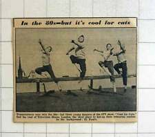 "1957 Young Dancers Of Itv Show ""cool For Cats""on Roof Of Television House"