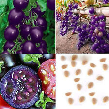 50pcs Rare Purple Cherry Tomato Organic Heirloom Home Yard Vegetable Plant Seeds