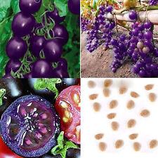 50pcs Rare Purple Cherry Tomato Organic Heirloom Home Yard Vegetable Plant Seeds