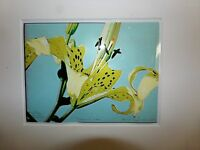 Unusual Outsider Art Yellow Lilies Print on Plastic Artist Signed