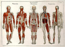 Other Science/Medicine
