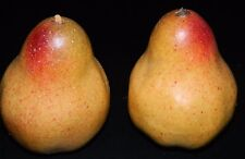 Yellow Pears Fake Food Fruit Home Decor Staging Props Theater Props 2 Pieces