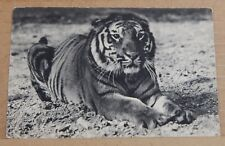 Postcard animals Tiger 1938 Paris zoo posted